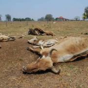 Sequía Panamá