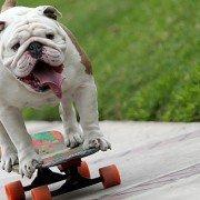 Otto el bulldog